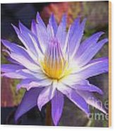 Purple Waterlily With Fall Lilypads Wood Print