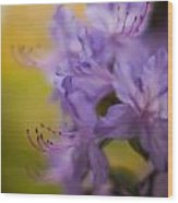 Purple Whispers Wood Print by Mike Reid