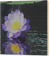 Purple White Yellow Lily Wood Print