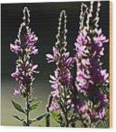 Purple Wild Flowers - 1 Wood Print