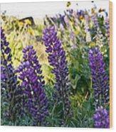 Purple Wildlfowers Wood Print