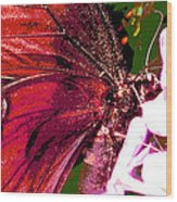 Purple Wings Two Wood Print