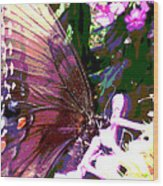 Purple Wings Wood Print