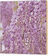 Purple Wisteria Wood Print