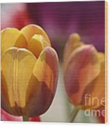 Purpleyellowtulips7016 Wood Print