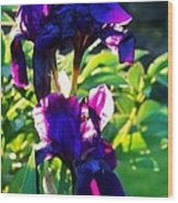 Purplr Iris Shines Wood Print