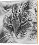 Purring Cat Wood Print