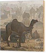 Pushkar Camel Fair - India Wood Print
