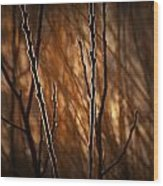 Pussy Willows In The Warm Sunlight Wood Print