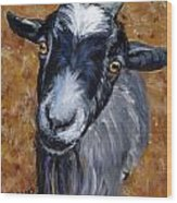 Pygmy Goat Looking Up Wood Print
