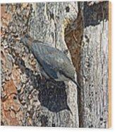 Pygmy Nuthatch At Nest Wood Print