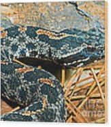 Pygmy Rattlesnake Wood Print