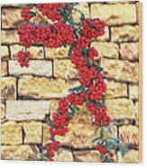 Pyracantha Berries On Stone Wall Wood Print