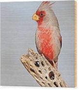 Pyrrhuloxia On Cholla Rib Wood Print