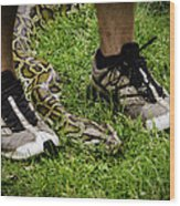 Python Snake In The Grass And Running Shoes Wood Print