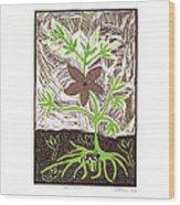 Qae Qane Wood Print