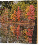 Quabbin Reservoir Fall Foliage Wood Print