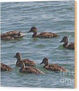 Quackers Wood Print
