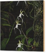 Quad Ghost Orchid Wood Print