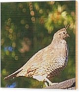 Quail Look Out Wood Print