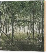 Quaking Aspen Wood Print