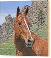 Quarter Horse Portrait Montana Wood Print
