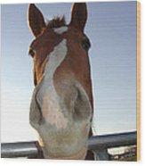 Quarter Horse Portrait Nosing Around Wood Print