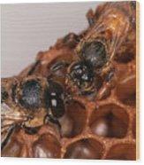 Queen And Drone Honeybees Wood Print