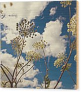Queen Anne Lace And Sky I Wood Print