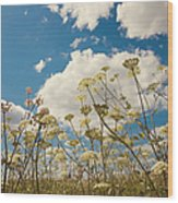 Queen Anne Lace And Sky Wood Print by Jenny Rainbow