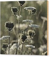 Queen Annes Lace - 1 Wood Print