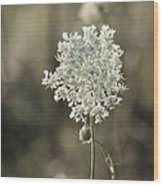 Queen Annes Lace - 3 Wood Print