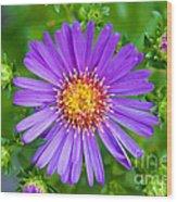 Queen Elizabeth Park Garden 5 Wood Print