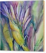 Queen Emma's Lily Blossom Wood Print