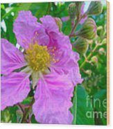 Queen Flower Or Giant Crepe Myrtle Flower Wood Print by Lanjee Chee