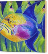Queen Triggerfish Wood Print