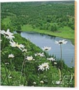 White Daisies At Queen's View 2 Wood Print