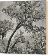 Quercus Suber Retro Wood Print