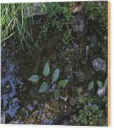 Quiet Brook In The Mountains Wood Print