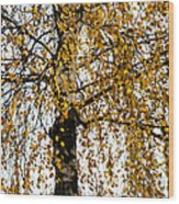 Quiet Charm Of Autumn Wood Print