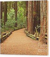 Quiet Forest Wood Print