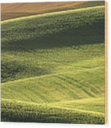 Quiet Morning In The Palouse  Wood Print by Sandra Bronstein