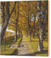 Quiet Parkway Wood Print