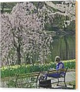 Quiet Time Among The Cherry Blossoms Wood Print