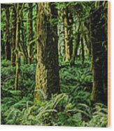 Quinault Rainforest Wood Print