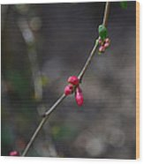 Quince Blooms Wood Print