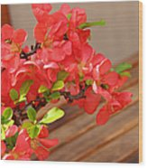 Quince Blossoms Wood Print