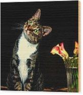 Quizzical Cat Wood Print