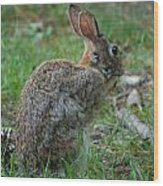 Rabbit 287 Wood Print