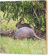 Rabbit And Armadillo Wood Print